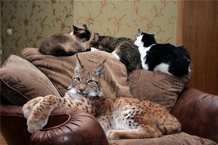 Фото домашних и диких кошек