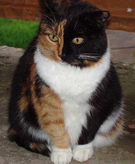 Фото одомашненных современных кошек