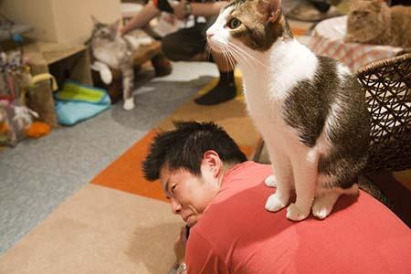 Японец в кошачьем кафе
