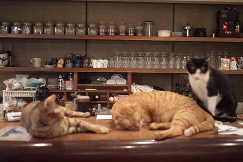 еда в кошачьих кафе