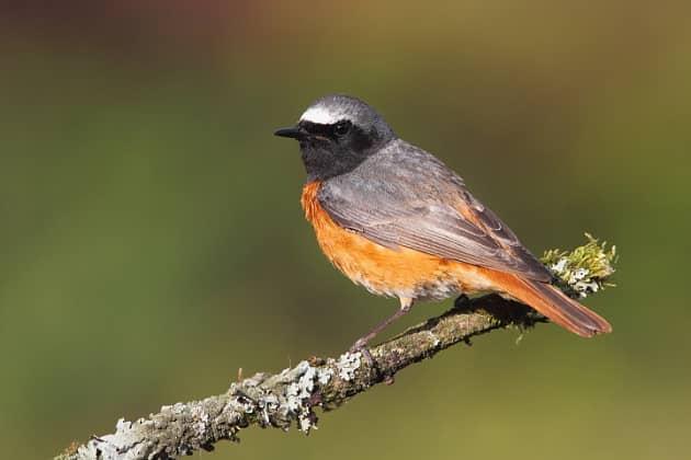 Птица сидит на ветке дерева