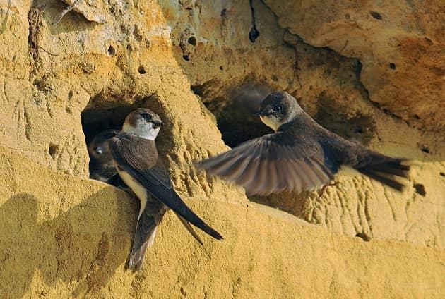 Фотография норы ласточки береговушки