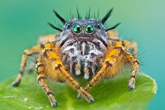 Фотография красивого паука