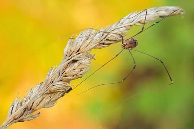 Фото сенокосца в поле